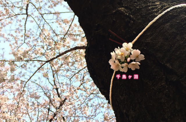 4.7chidori-2.jpg